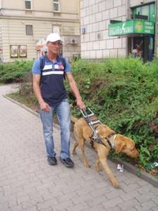Chodnikiem idzie mężczyzna z psem przewodnikiem