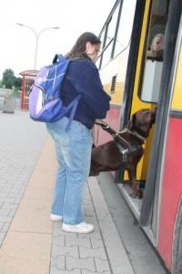 Pies przewodnik pokazuje kobiecie wejście do autobusu