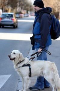 Mężczyzna stoi przed przejściem dla pieszych ze swoim psem przewodnikiem
